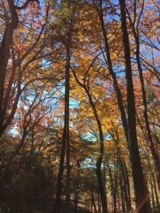 walden-in-fall-2-2016