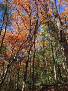 walden-in-fall-2016